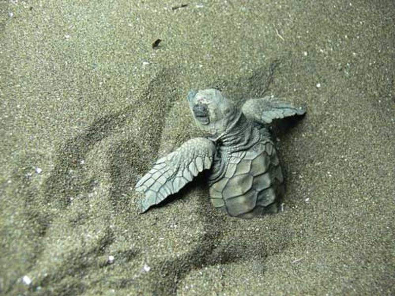 VELAS: THE VILLAGE WITH A MISSION TO SAVE ENDANGERED TURTLES